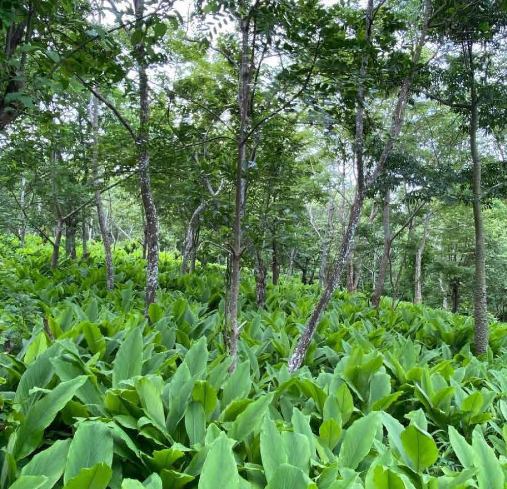 Agroforestry/Environmental Impact